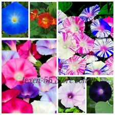 100 Ipomoea Flower Seeds Morning Glory Pharbitis Quamoclit Rare 26 Kinds Plants
