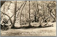 RPPC Postcard Muir Woods National Monument CA Fallen tree log shapes Zan 14