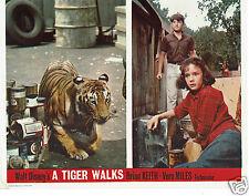Walt Disney A Tiger Walks Vera Miles 6 x Lobby Cards   UK