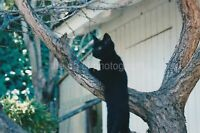 Tree Cat FOUND PHOTOGRAPH Color FREE SHIPPING Original Snapshot VINTAGE 95 30 W