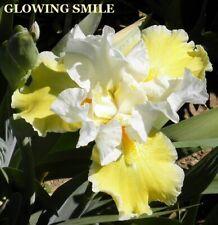 "2 ""Glowing Smile & Leaping Dolphin"" Tall Bearded Iris Rhizomes"