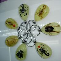 Scorpion Glow Lucite Keyring Keychain Insect Jewelry Taxidermy Gift  WA