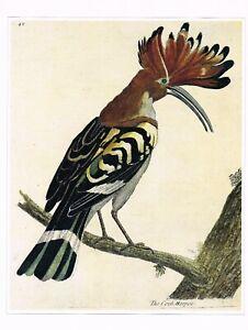 Hoopoe Bird Print Picture Vintage Eleazar Albin Old 1990 CNHPBI#09