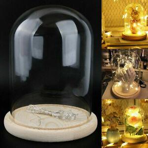 Glasglocke Glashaube Holzteller DIY Deko Glaskuppel Bell Jar mit 4M LED Licht
