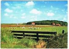 Ansichtkaart Nederland : Texel - Schapen in wei (0354)