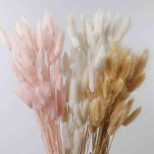50x Getrocknete Blumen Pampasgras Bündel Kunst Gräser Hochzeit Store Home Deko-