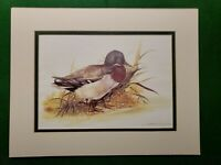 Duck Print by Joel Kirk Beautifully Matted Superb Condition Ready to Frame