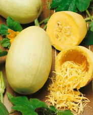 100 Spaghetti Winter Squash Heirloom Vegetable Seeds + Gift - COMB S/H