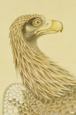"JAPANESE EAGLE HANGING SCROLL 80.5"" Painting HAWK Pine PIC Picture Japan c345"