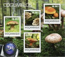 Mozambique setas SELLOS 2014 estampillada sin montar o nunca montada Boletus seta de hongos naturaleza 4v m/s