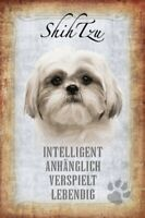 Shih Tzu Hund Dog Blechschild Schild gewölbt Metal Tin Sign 20 x 30 cm