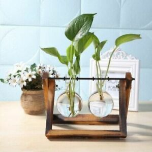 Plant Flower Pot Hanging Bonsai Home Decor Transparent Glass Vase And Wood Frame