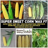 CORN Super Sweet MAX F1 15+ Seeds vegetable garden SPRING SUMMER sweetcorn plant