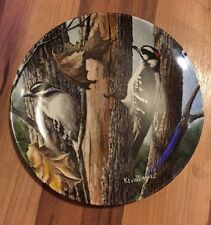 Beautiful Downy Woodpecker Plate By Kevin Daniel - Encyclopedia Britannica