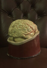 Original Vintage Medical Brain Model on Stand - Medical / Gothic / Curiosity