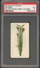 PICKEREL 1888 N8 Allen & Ginter 50 Fish From American Waters PSA 5 EX