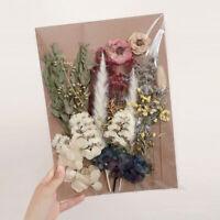 Dried Flower DIY Set Leaf Embossed Frame Pressed Scrapbooking Craft Accessories
