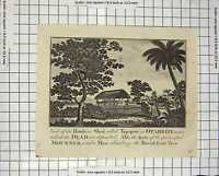 Original Old Antique Print C1800 House Shed Tupapow Otaheite Bread-Fruit Tree