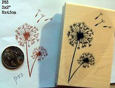 Dandelion flowers rubber stamp WM P53