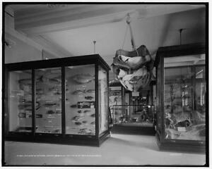 Gallery,natural history,Brooklyn Institute,Arts,Sciences,Museum,New York,c 7663