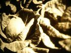 Vintage+16mm+Soviete+educational+documentary+%22+Vegetable+grower+%22+film+B%2FW+movie