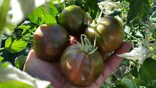 10 graines de tomate Moonlight Mile tomato seeds méth.bio