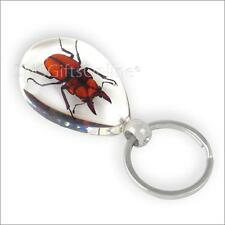 Clear Acrylic Amber Golden Stag Beetle Keyring Insect Keychain
