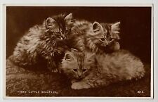 """POSTCARD - cats, fluffy tabby kittens """"Three Little Beauties"""" real photo RP"""