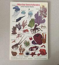 Marine Invertebrates (Florida, Bahamas, Bermuda, Caribbean & Tropical Atlantic)