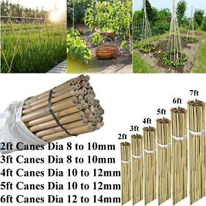 2ft-7ft Large Bamboo Canes Strong Heavy Duty Thick Pole Plants Garden Supported
