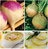 Turnip Seeds Mediterranean Collection PEPPERY & CRUNCHY Nabos Mediterraneos