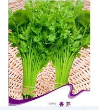 Celery Seed Vegetable Seed Apium Graveolens Garden Seed ~1 Pack 60 Seeds~