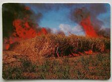 Airlie Beach Whitsundays Sugar Cane Firing the Cane 1988 MV Postcard (P289)