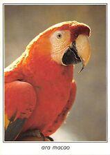 BF40049 ara macao parrot perroquet bird oiseau