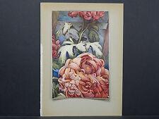Botanicals, Floral, Edward J. Detmold, c. 1913 #02