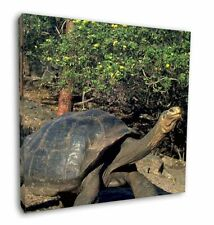 More details for giant galapagos tortoise 12