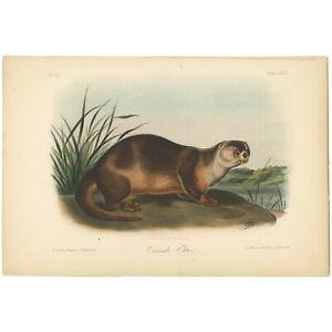 Audubon Octavo Quadruped Bowen 1849 hand-colored lithograph Pl 122 Canada Otter
