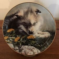 "Bradford Exchange Wolf Pups, ""Tomorrow's Pride� Faces Of The Wilderness Plate"