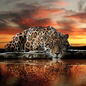 Tapete LEOPARD Fototapete Vlies Natur Afrika Gepard Orange Jaguar Safari FW126VE