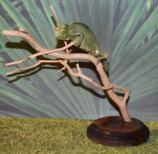 Beautiful Real Taxidermy Lifelike Mounted Jackson's Chameleon Reptile See Below
