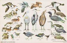 RSPB - Bird Cards - 1960 - N.W.CUSA . Chart N° 8 - 325X210