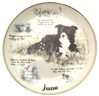 Danbury Mint Border Collie plate June Paul Doyle Dog Plates CP2169