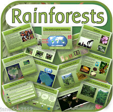 KS2 Geography topic THE RAINFOREST Jungle Primary IWB Teaching Resources on CD