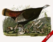 THE WILD TURKEY & BABY CHICKS AVIARY BIRD PAINTING AVIAN ART REAL CANVAS PRINT