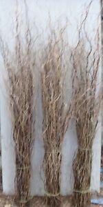Fresh cut twisted willow twigs