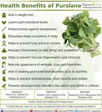 300+ Purslane  Seeds-Organic-Non GMO- Portulaca oleracea