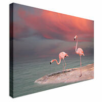 Pink flamingo  Canvas Wall Art Picture Print
