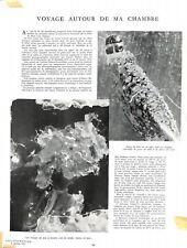 Photos de Lucien Rudaux larve de mite moustique criquet  WWII 1941 ILLUSTRATION