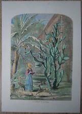 1872 Bryant print GARDEN IN ST. AUGUSTINE, FLORIDA (#196)