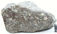 NEA 018 LL3 Primitive Chondrite Meteorite Rare, Type 3 Meteorite 691 Gram